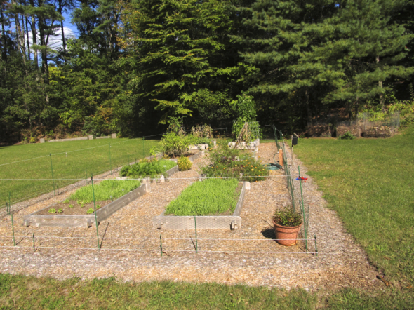Raised bed garden surrounded by low voltage deer fencing