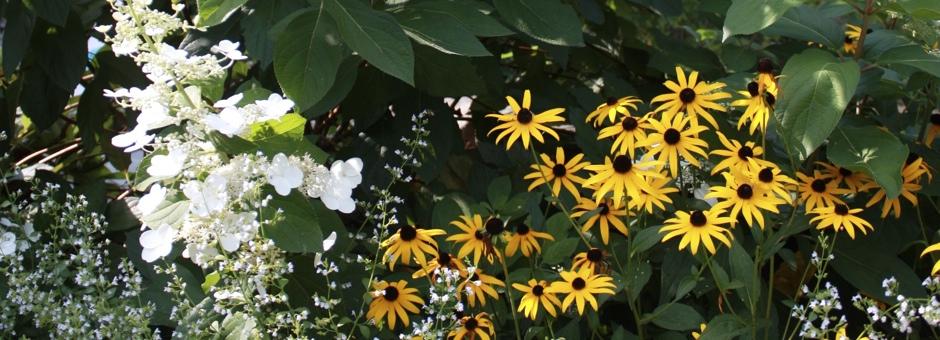 IMG_0335-Summer-Version-3
