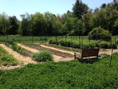 Nutrient dense organic  food garden in Harvard MA