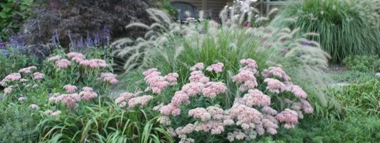 Grasses-Sedum