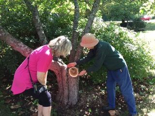 Juliet Silveri and Priscilla Williams of PBOG instructing participants of the red bud tree pruning workshop at the Prescott Common