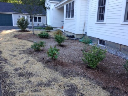 Microclover Lawn on Historic Home in Groton