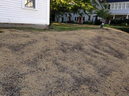 Microclover Lawn Makeover