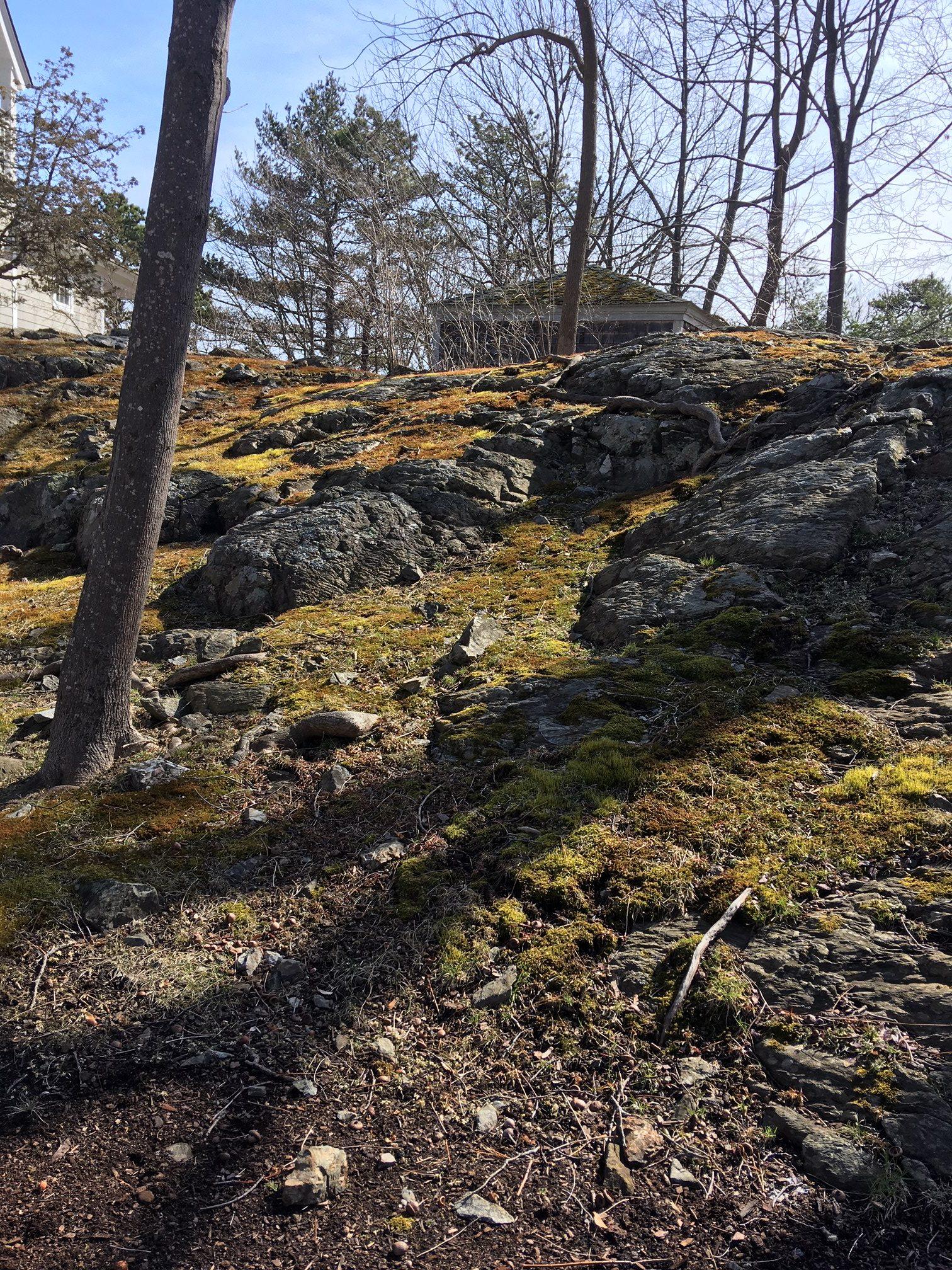 Haircap Rock Cap Moss Pumpkin Brook Organic Gardening
